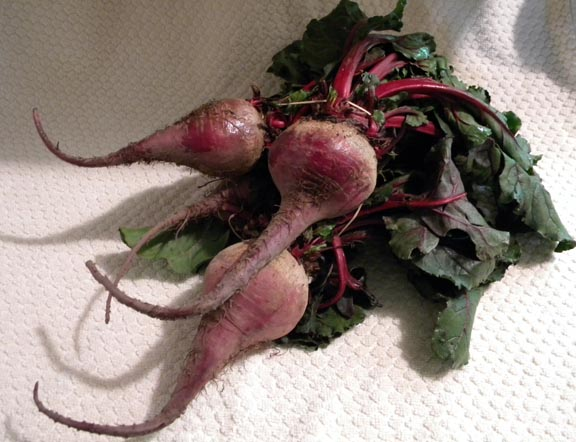 Large bunch with four huge beets $3.50